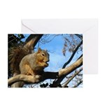 Squirrel in Autumn Horizontal Greeting Cards (10)