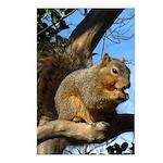Squirrel in Autumn Vertical Postcards (8)