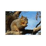 Squirrel in Autumn Horizontal Magnets (100)