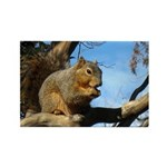 Squirrel in Autumn Horizontal Magnets (10)