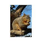 Squirrel in Autumn Vertical Magnet