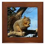 Squirrel in Autumn Framed Tile