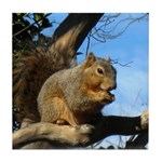 Squirrel in Autumn Tile Coaster