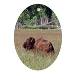 Bison in Field Oval Ornament