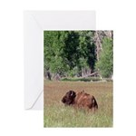 Bison in Field Vertical Greeting Card