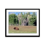 Bison in Field Framed Panel Print