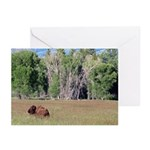 Bison in Field Horizontal Greeting Cards (10)