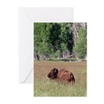 Bison in Field Vertical Greeting Cards (10)