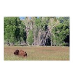 Bison in Field Horizontal Postcards (8)