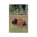 Bison in Field Vertical Magnet