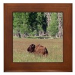 Bison in Field Framed Tile
