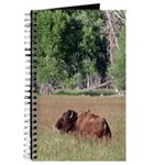 Bison in Field Journal