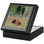Bison in Field Keepsake Box
