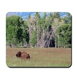 Bison in Field Mousepad
