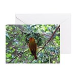 Saffron Finch Horizontal Greeting Cards (10)