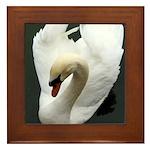 Tranquil Swan Framed Tile
