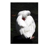 Napping Swan Vertical Postcards (8)