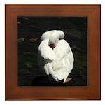 Napping Swan Framed Tile