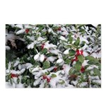 Snowy Holly Horizontal Postcards (8)