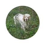 """Clumber Spaniel 3.5"""" Button (100 pack)"""