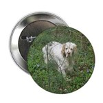 """Clumber Spaniel 2.25"""" Button (100 pack)"""