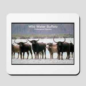 Wild Water Buffalo Photo Mousepad