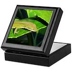 Green Anole on Leaf Keepsake Box
