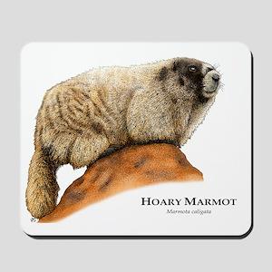 Hoary Marmot Mousepad