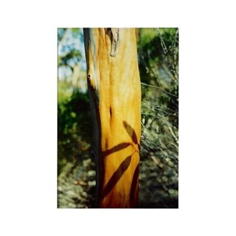 Yellow Gum Tree Trunk Rectangle Magnet