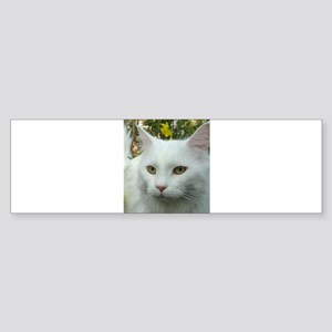 maine coon fourth white Bumper Sticker