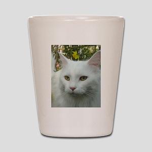 maine coon fourth white Shot Glass