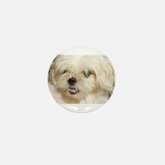 My Shitzu Baby Mini Button