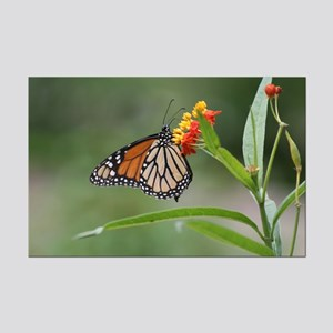 Mini Poster Print-Butterfly