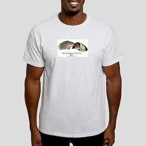 Neolamprologus Multifasciatus Ash Grey T-Shirt
