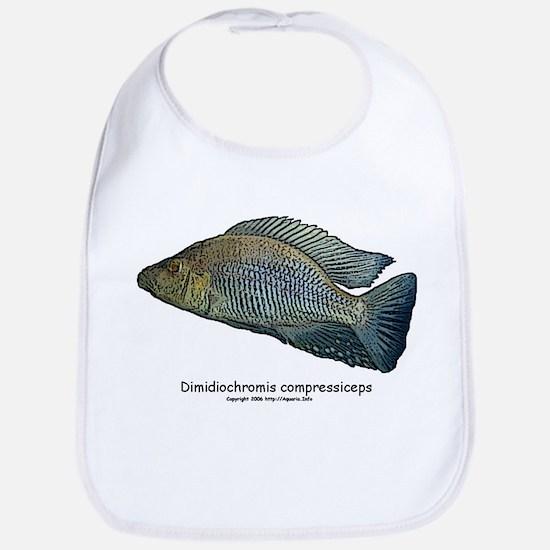 Haplochromis compressiceps Al Bib