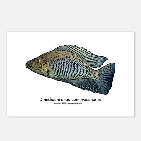 Haplochromis compressiceps Al Postcards (Package o