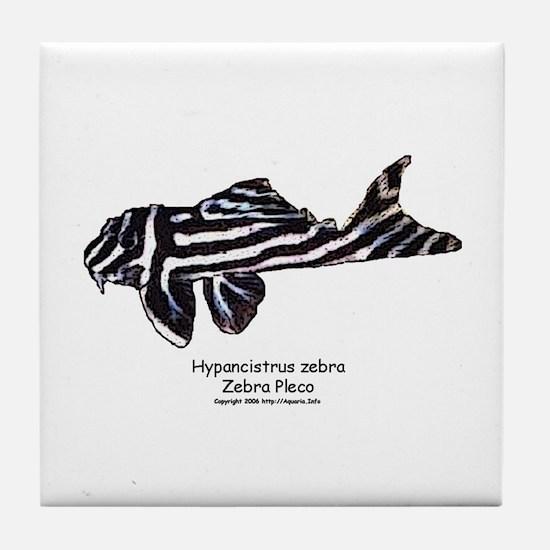 Hypancistrus zebra (Zebra Ple Tile Coaster