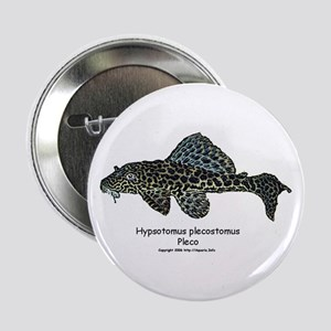 Hypostomus plecostomus Button