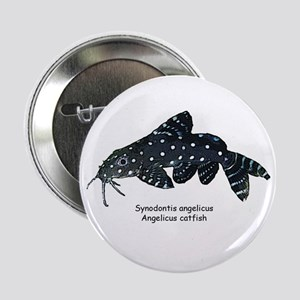 Synondontis angelicus Button