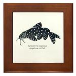 Synondontis angelicus Framed Tile