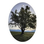 Tree Oval Ornament