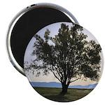 Tree Magnets