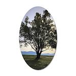 Tree Sticker 35x21 Oval Wall Decal