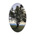 Tree Sticker 20x12 Oval Wall Decal