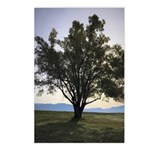 Tree Postcards (package Of 8)