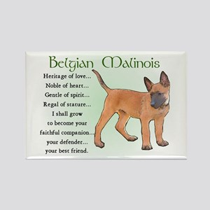 Belgian Malinois Rectangle Magnet (10 pack)