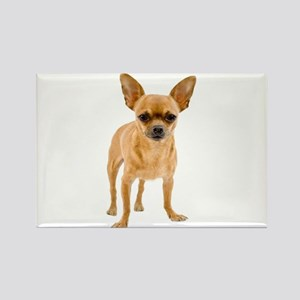 Chihuahua Stand Rectangle Magnet