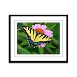 Tiger Swallowtail Framed Panel Print