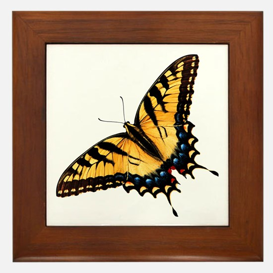 Tiger Swallowtail Butterfly Framed Tile