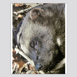 Sleeping Wolverine Small Poster